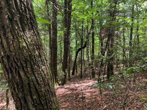 Subdivision Lot Auction Glade : Glade Valley : Alleghany County : North Carolina