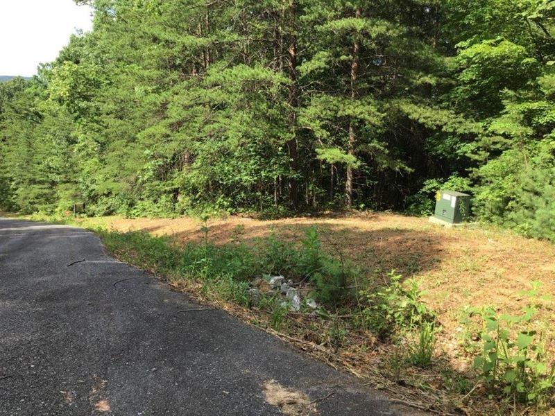 Recreational Land Auction Ferguson : Ferguson : Wilkes County : North Carolina