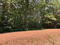 Investment Potential Land Auction : Ferguson : Wilkes County : North Carolina