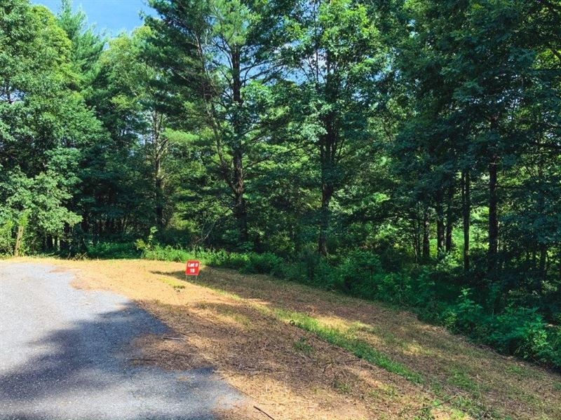 Multi Parcel Land Auction Wilkes : Ferguson : Wilkes County : North Carolina