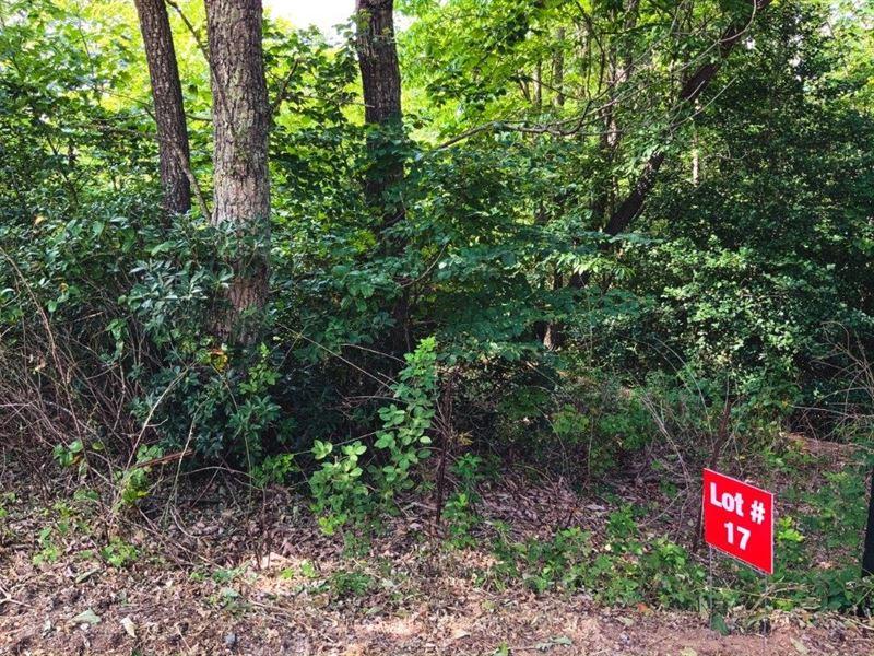 Ridge Top Wooded Land in NC : Ferguson : Wilkes County : North Carolina