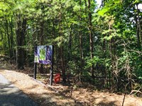 Wooded Land For Sale in Ferguson NC : Ferguson : Wilkes County : North Carolina