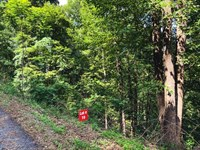 Wooded Building Site Auction : Ferguson : Wilkes County : North Carolina