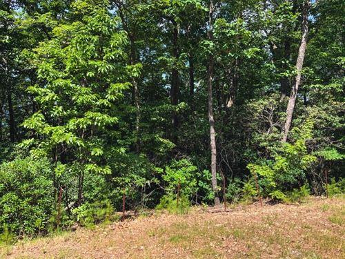 Premier Ridge Wooded Land Ferguson : Ferguson : Wilkes County : North Carolina