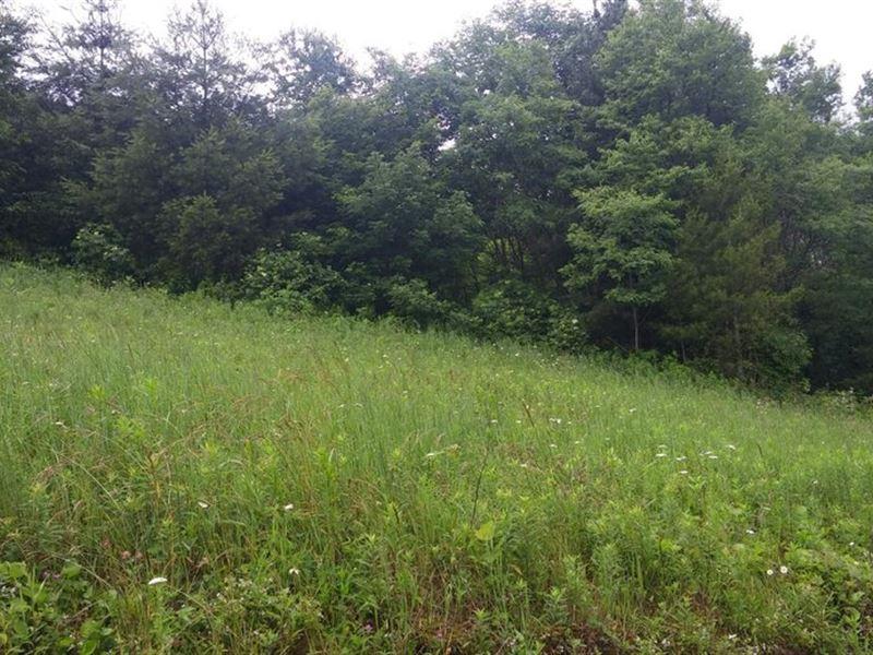 82+/- Acres In Avery County, Nc : Newland : Avery County : North Carolina