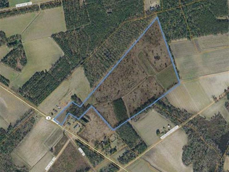 Agricultural Land : Nichols : Horry County : South Carolina