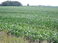 Important Land Auction In Indiana : Markleville : Madison County : Indiana