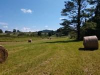 Woods Pasture Land Auction Floyd VA : Floyd : Floyd County : Virginia