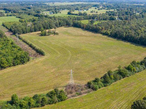 50 Acres Hohenwald TN For Auction : Hohenwald : Lewis County : Tennessee