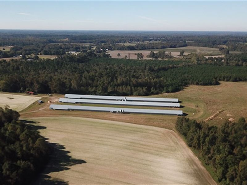 Bankruptcy Sale Without A Buyer : Whitakers : Nash County : North Carolina
