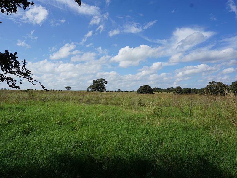 No Reserve Grassland Auction, Agra : Agra : Lincoln County : Oklahoma