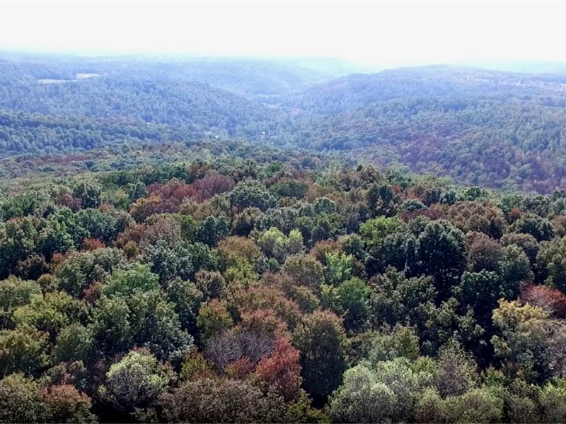 168 Acres Of Timberland, 3 Tracts : Cookeville : Putnam County : Tennessee
