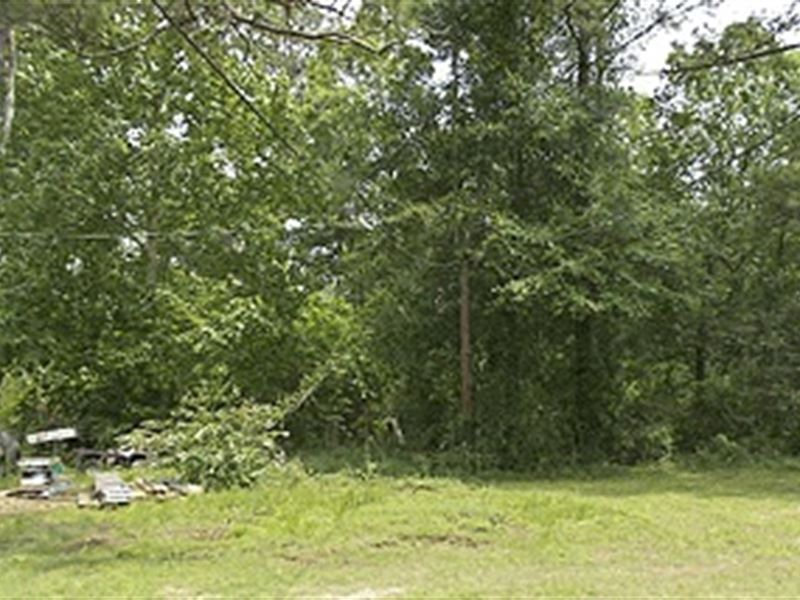 Wooded Lot in Covington La : Covington : Saint Tammany Parish : Louisiana