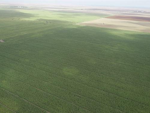 Excellent Soils in Lane County, Ks : Dighton : Lane County : Kansas