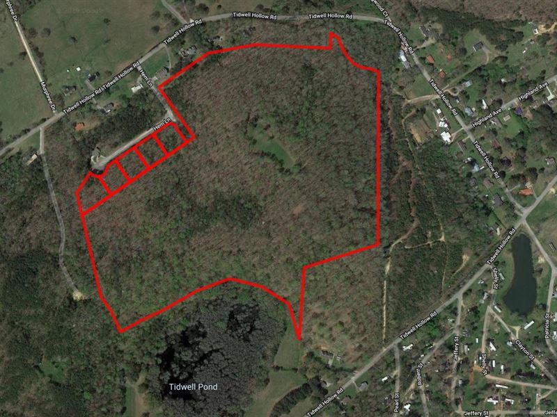 Auction 60 Acres Near Oneonta : Oneonta : Blount County : Alabama