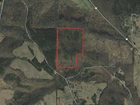 Absolute Auction Of 61 Acres : Ryan Crossroads : Morgan County : Alabama