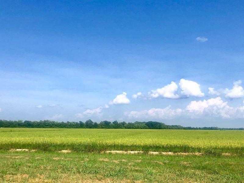143 Irrigated Acres Farm Land Just : Poplar Bluff : Butler County : Missouri