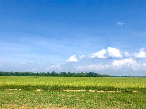 143 Irrigated Acres Farm Land Just : Poplar Bluff : Butler County : Missouri