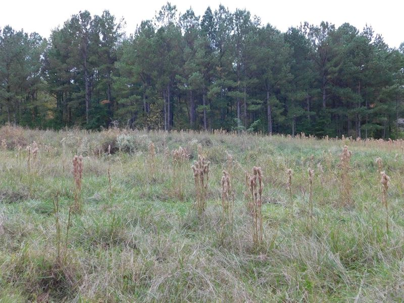 37 Residential Lots & 239 Acres : Fitzpatrick : Montgomery County : Alabama