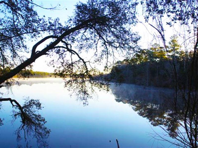 Home Sites, Recreation & Timber : Reidsville : Tattnall County : Georgia