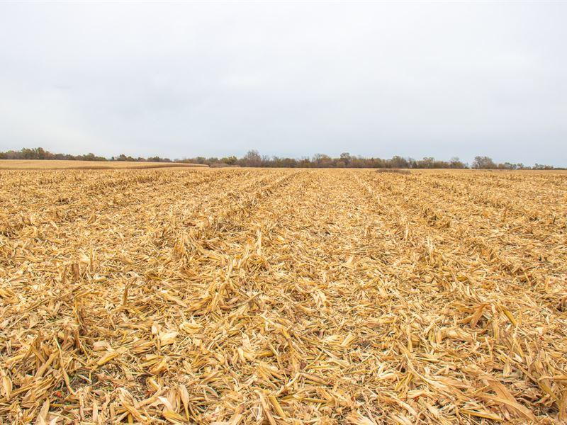 Christian County Farmland Online : Mount Auburn : Christian County : Illinois