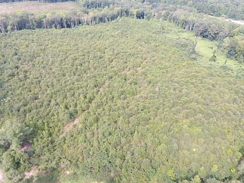 35+/- Acres Located in Richmond Cty : Rockingham : Richmond County : North Carolina