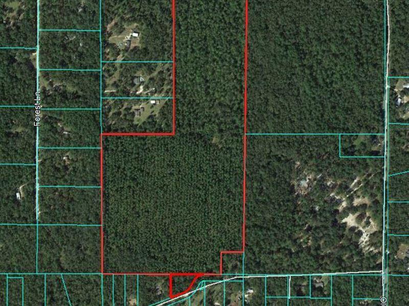 61.21 Acres Timberland : Crawfordville : Wakulla County : Florida