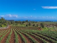 Sustainable and Georgous Acreage : Pepeekeo : Hawaii County : Hawaii