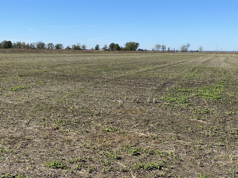 Investment Farm Near Big Lake Wma : Gosnell : Mississippi County : Arkansas