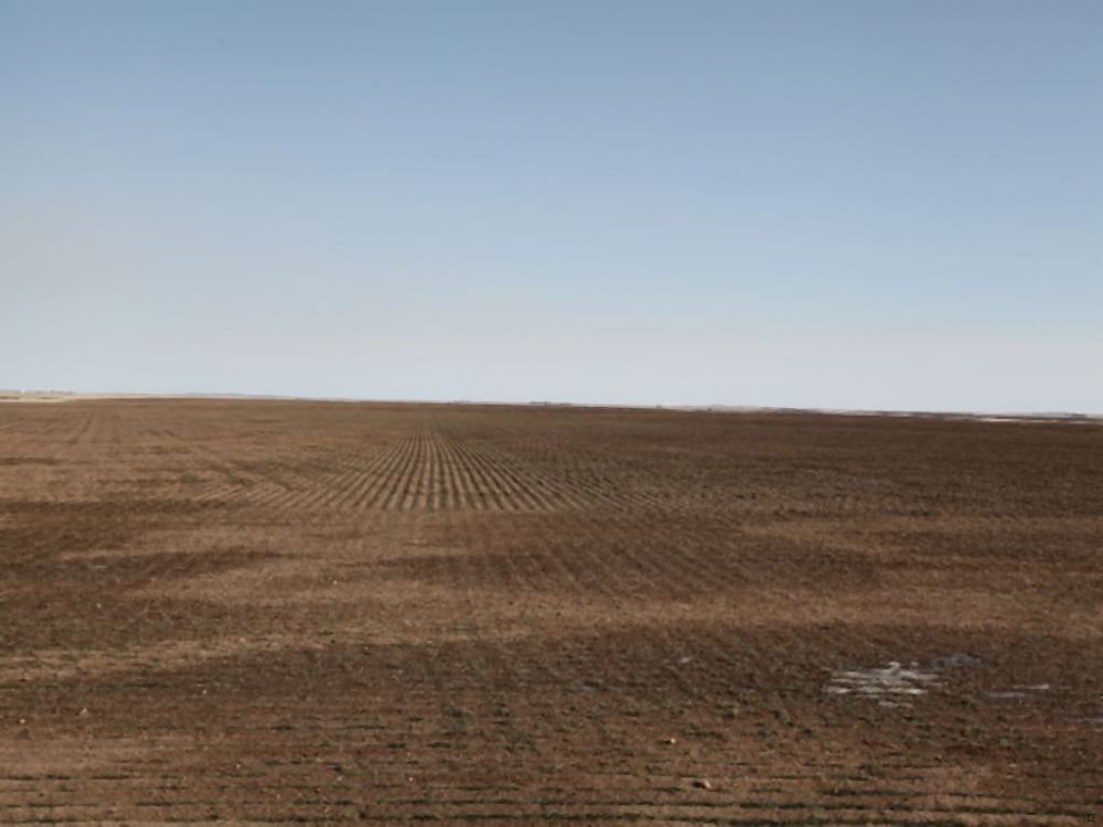 Willene B. Dilsaver Dryland Auction : Haxtun : Phillips County : Colorado