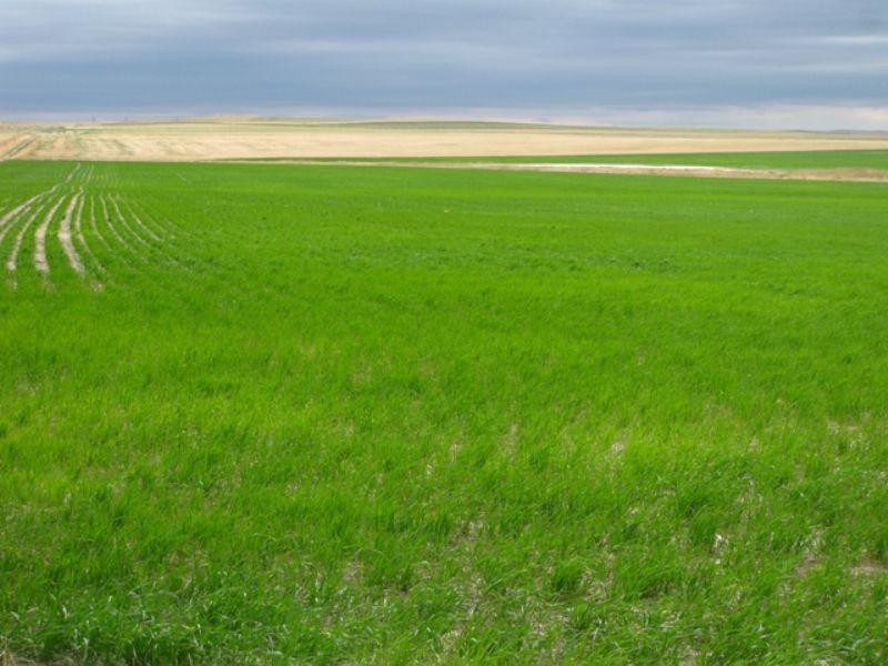 478 Acres : Okaton : Jones County : South Dakota