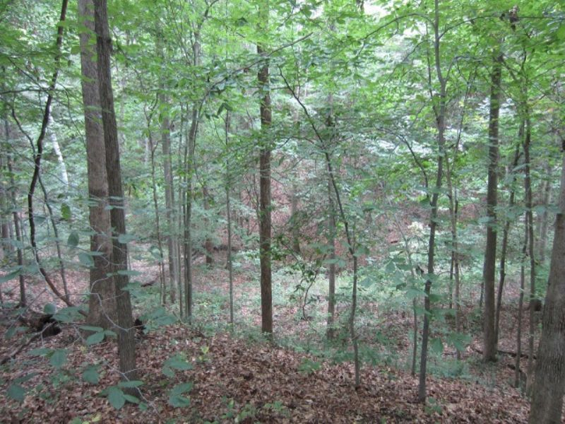 Land Auction - 23± Wooded Acres : Bloomington : Monroe County : Indiana