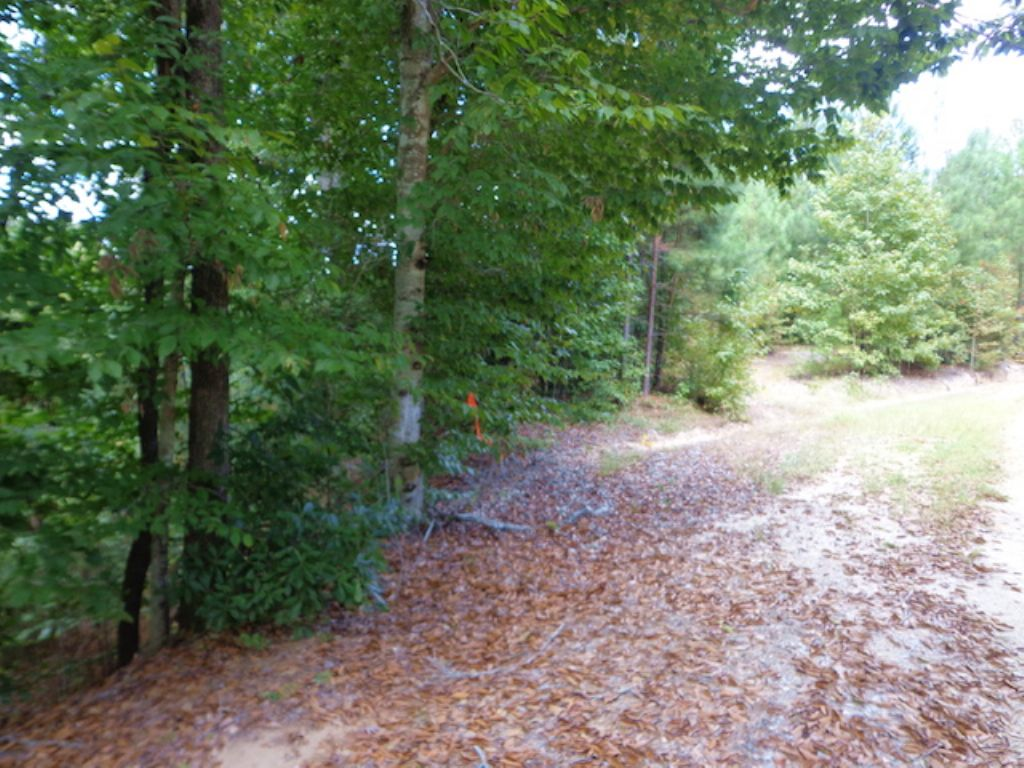 100+/- Acres Of Timberland : Columbia : Caldwell Parish : Louisiana