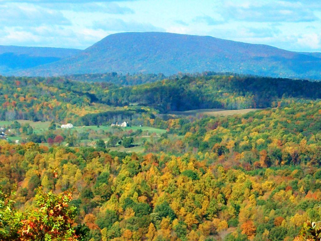 Absolute: 383.103 Wooded Acres On S : Fairfield : Rockbridge County : Virginia