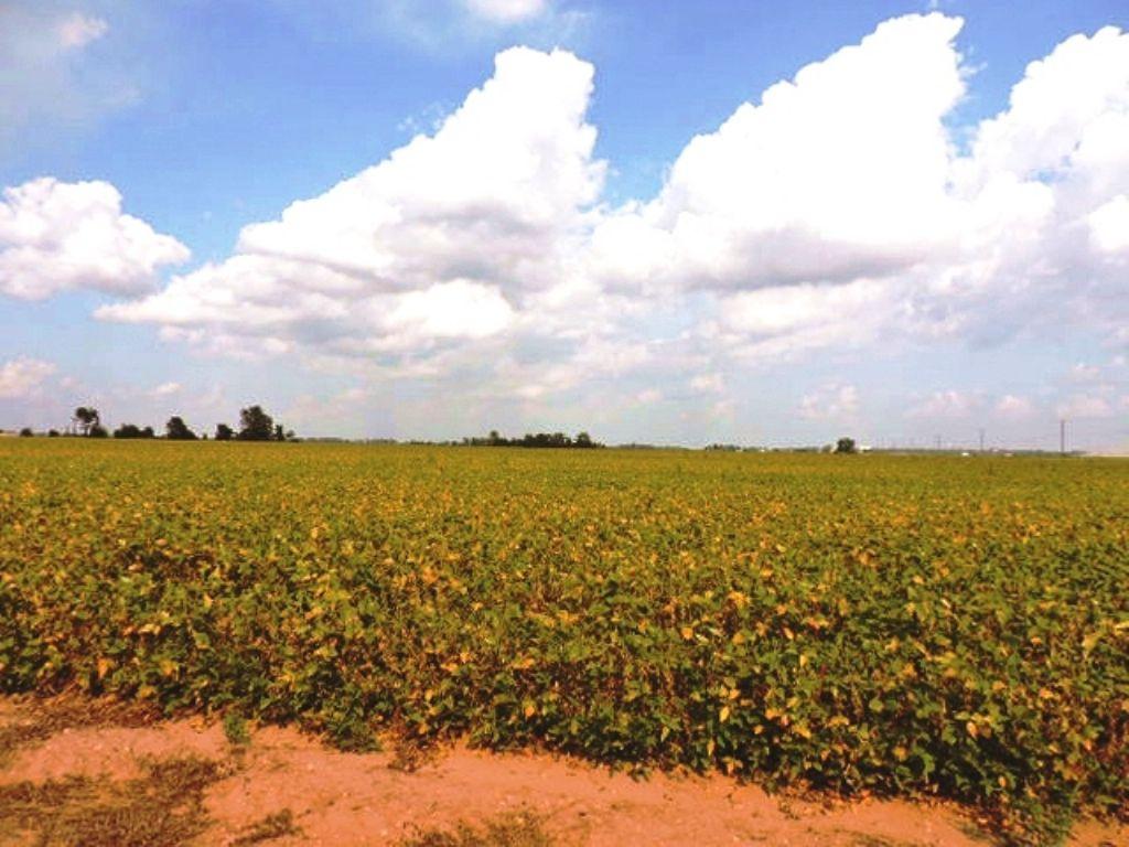 Arkansas Farmland Auction : Black Oak : Craighead County : Arkansas