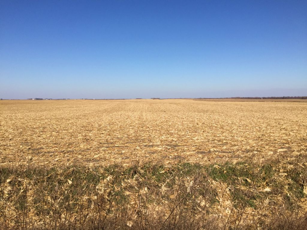 Productive Farmland : West Bend : Palo Alto County : Iowa