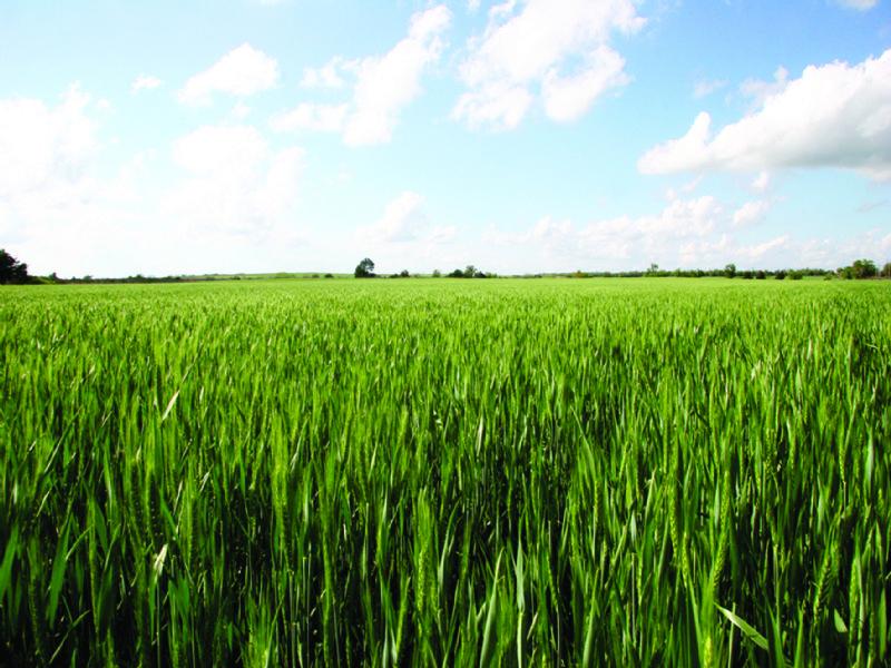 240 Acres Productive Farmland : Eakly : Caddo County : Oklahoma