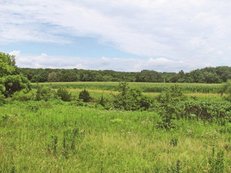 Online-only Auction - Prime Hunting : Stockport : Van Buren County : Iowa