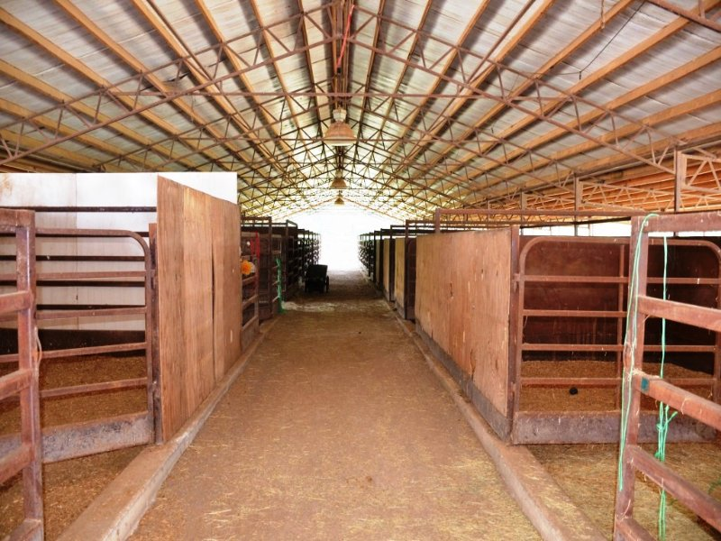 Equestrian Center Auction : Cullman : Cullman County : Alabama