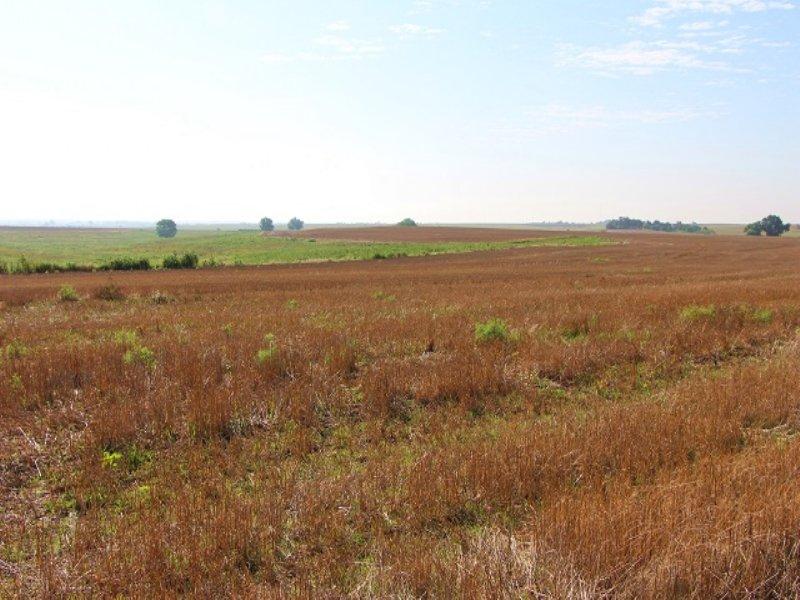 Farm & Pasture Land Auction : Greensburg : Kiowa County : Kansas