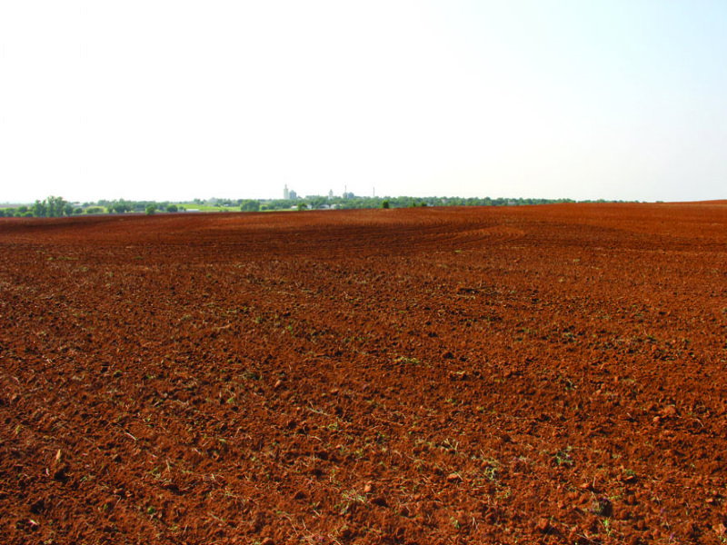 160 Acres Of Productive Farmland : Custer City : Custer County : Oklahoma