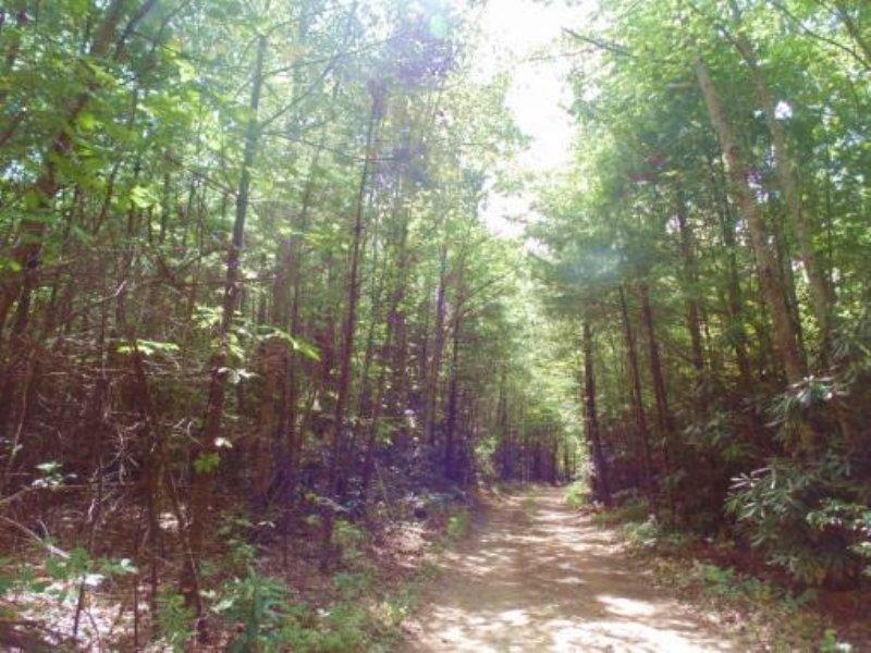 Virginia 29± Acre Auction : Dugspur : Carroll County : Virginia