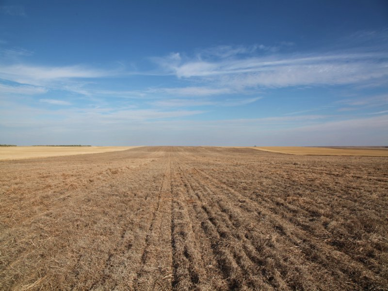 1,039.3+/- Acres Dryland : Fleming : Logan County : Colorado