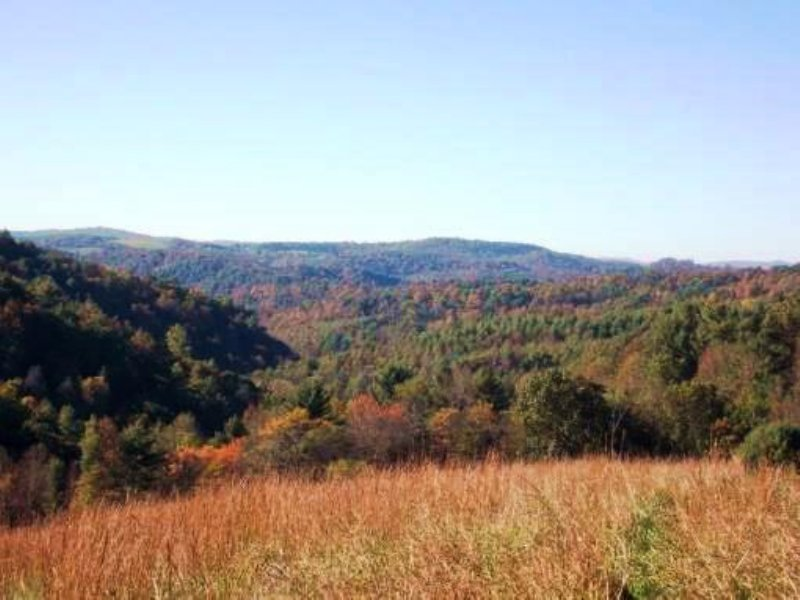 Virginia Land Auction : Dugspur : Carroll County : Virginia