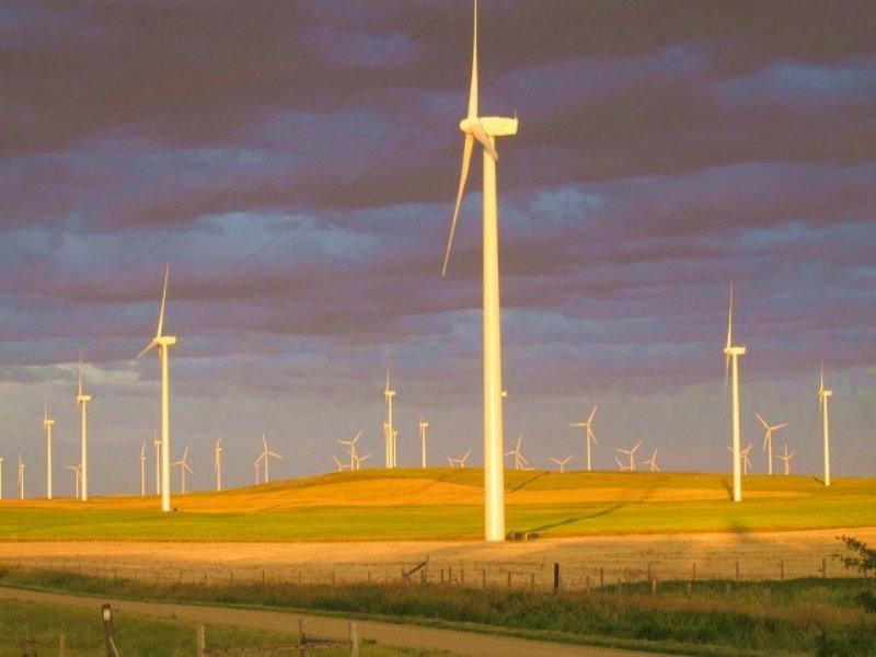 Montana Farmland Auction : Ethridge : Toole County : Montana